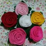 Asima craft
